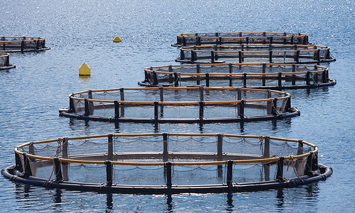 Intelligent Products for Aquaculture Development